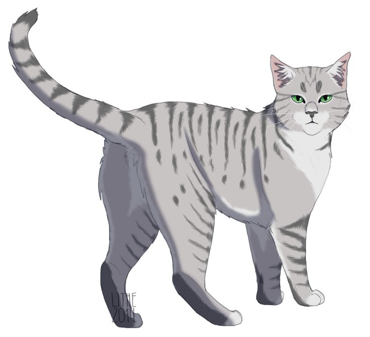 Warriors Dawn Of The Clans Characters: 1000+ Images About RiverClan Cats On Pinterest