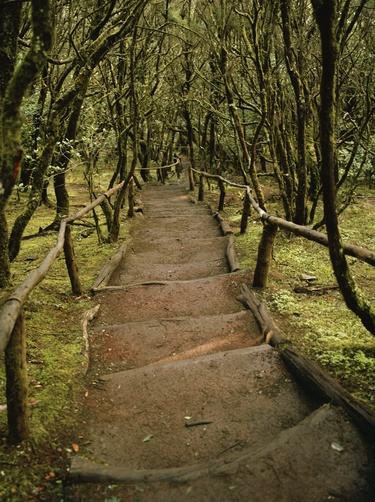 A dirt hiking path through the Garajonay National Park on La Gomera. Location: La Gomera, Canary Islands, La Gomera, Canary Islands, Spain Photographer: JUSTIN GUARIGLIA/National Geographic Stock