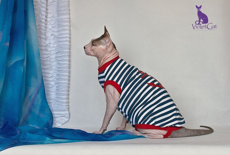 Sailor man. T-shirt for sphynx. by VioletCatpets on Etsy