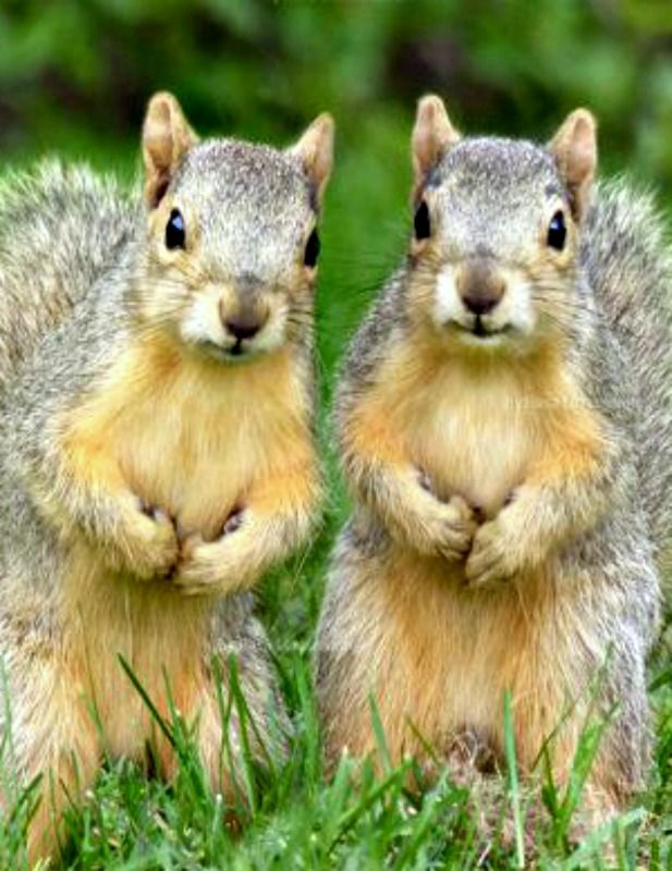Hand over the nuts and no one get's hurt...