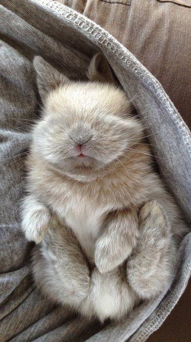 Adorable little baby bunny