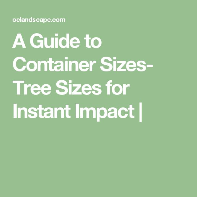 A Guide to Container Sizes- Tree Sizes for Instant Impact |