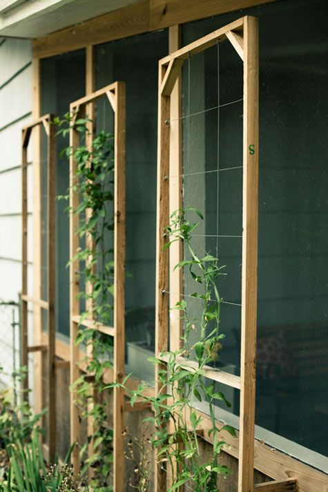 trellises from simple cedar boards and wire cabling. They worked perfectly! (Plants front to back: sweet pea vine, clematis, pinata rose.) via Brian Everett