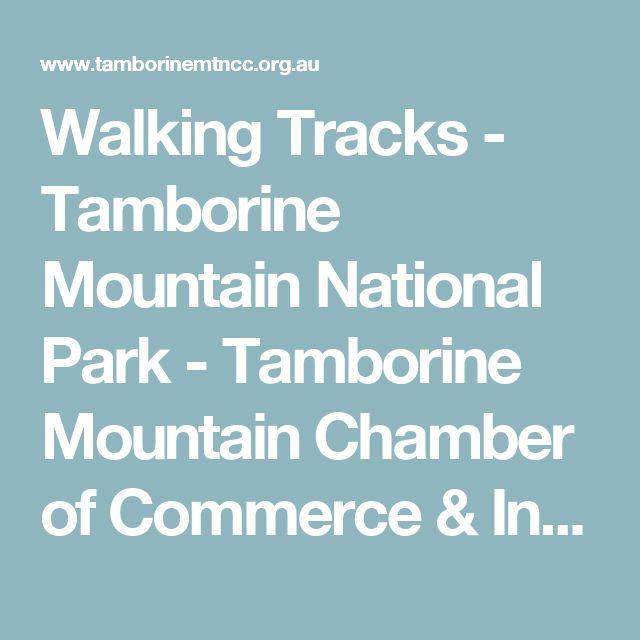 Walking Tracks - Tamborine Mountain National Park - Tamborine Mountain Chamber of Commerce & Industry Inc.
