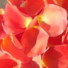 Click to Order Deep Orange Rose Petals