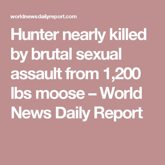 Hunter nearly killed by brutal sexual assault from 1,200 lbs moose – World News Daily Report