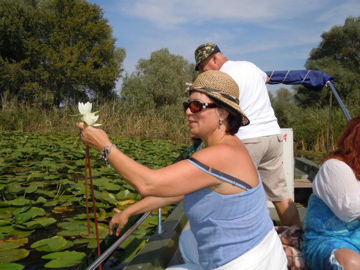 Water lily from Danube Delta