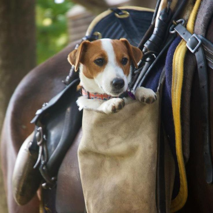 Jack-in-a-pocket attached to the horse saddle