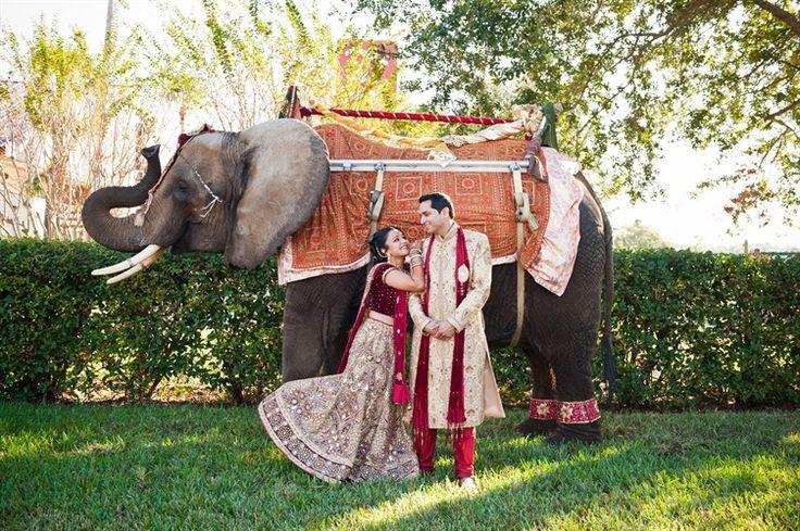 an elephant at a beautiful Indian Wedding Florida   Sona Photography 23