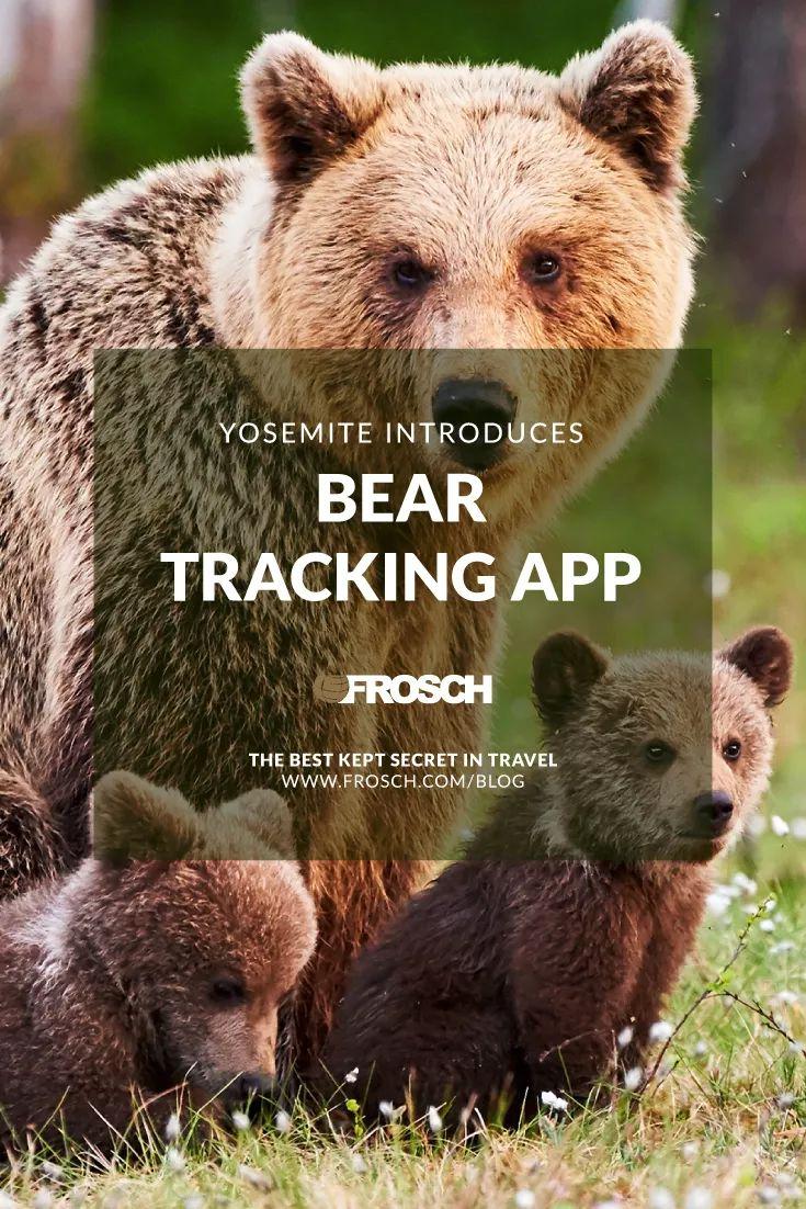Yosemite Introduces Bear Tracking App