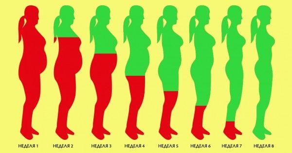 Jak stopienia nadmiar tłuszczu w 8 tygodni: stabilny wynik bez wagi efektu zwrotnego.