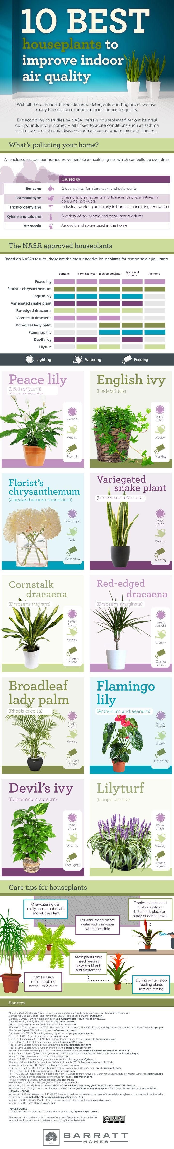 10 Best Plants to Improve Indoor Air Quality #infographic #Home #Health