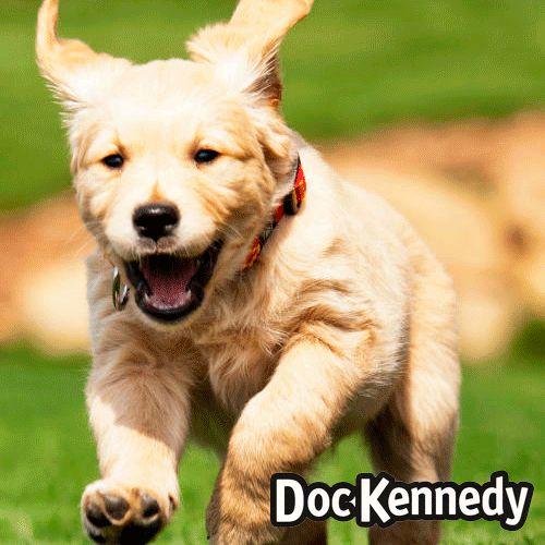 Doc Kennedy te ofrece un formato de 20 kg. en el alimento de tu perro. Elije el que necesitas en nuestra tienda!