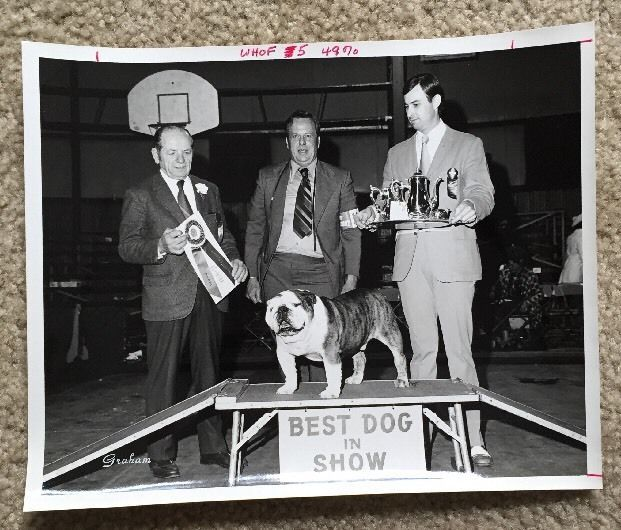 1972 -Bulldog Best Dog In Show Tuscaloosa KC kennel Club Award