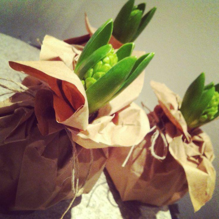 Bloembollen in papier. Ook leuk om cadeau te geven op deze manier! Klein maar fijn! Voorjaar - Lente