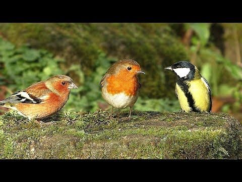Birds and Squirrels in Slow Motion with Relaxing Bird Sounds ★ One Hour ★ - YouTube