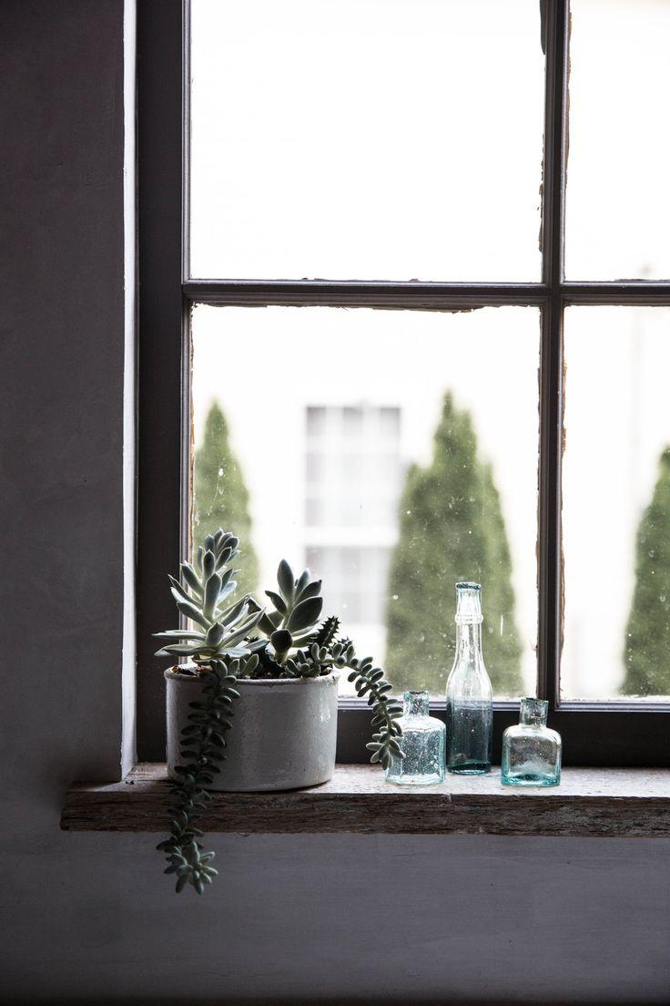 plants succulents