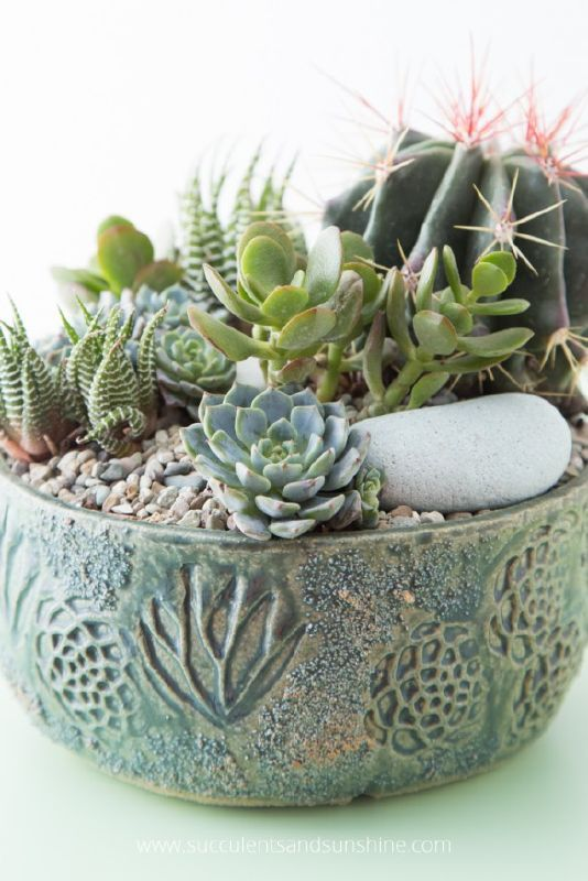 The Succulent Addictu0027s Gift Guide