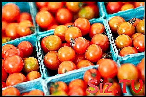 Small little red tomatoes  101 ActivitiesForKids A #ActivitiesForKids #art #back…