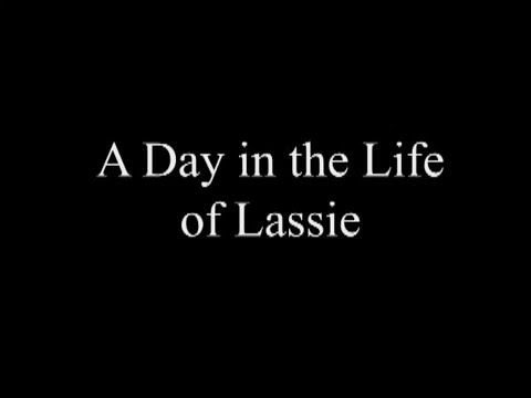 A day in the life of Lassie/Available for Adoption