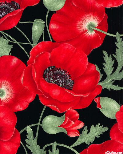 """Stunning, realistically drawn poppies aflame with ruby colors bloom over a dark ground in this dramatic floral print. The large scale perfectly spotlights these brilliant flowers with show stopping results. Larger flowers are about 6 1/2"""", from the 'Flora' collection by Chong-A Hwang for Timeless Treasures."""