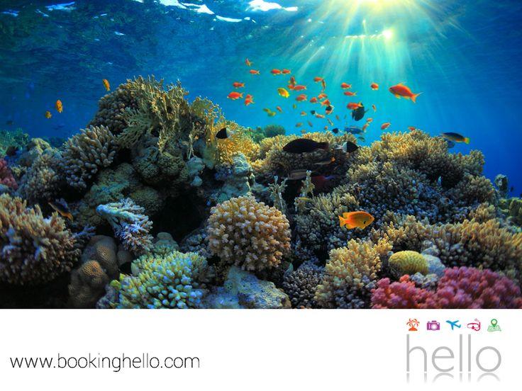 VIAJES PARA JUBILADOS TODO INCLUIDO AL CARIBE. República Dominicana, puede satisfacer los gustos de todo turista que llegue a vacacionar al destino tropical más famoso del mundo. Pasar tus vacaciones aquí te permitirá admirar la belleza de su hábitat natural, tomar el sol en sus playas y explorar sus bancos de peces multicolores, arrecifes, corales y más, en una experiencia de snorkeling. En Booking Hello, te invitamos a regalarte el mejor viaje de tu vida. #BeHello