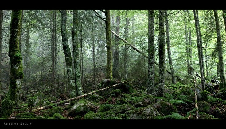 forest - in the black forest