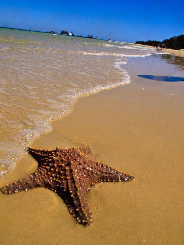 Starfish in the sand at waters edge Moreton Island, Brisbane Australia http://maloufdental.com.au/