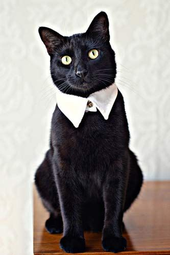 The ULTIMATE Pet Gift Guide #refinery29  (I can't wait to make one of these collars for my cat!)