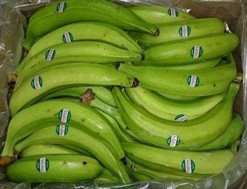 Platanos Japon  Venta de Ecuador plátanos verdes! Los platanos de Ecuador llegaron en Marzo de el ano 2016! Favor visite platanosjapon.com - Please visit platanosjapon.com -platanosjap...