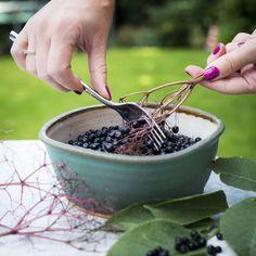 O černém bezu bývá nejčastěji řeč na jaře, když kvete. Ale znáte jeho plody, černé kuličky, kterými jsou keře teď přímo obsypané? Nasbírejte si je a zpracujte. Až bude venku lezavo, oceníte jejich sílu.