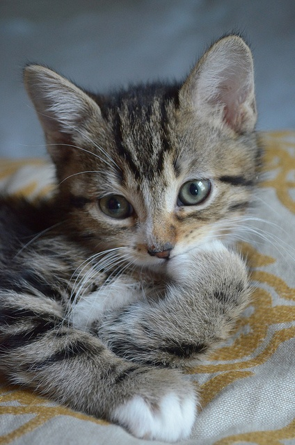 can i take her home!?: Animal Pics, Cat, Baby Owiee, Kitty Committ, Cute Kitty, Bitty Kitty, Baby Tigger, Cute Kittens, Baby Daphne