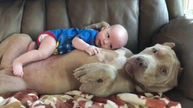 Pitbull 'adota' bebê e deixa todo mundo babando de fofura