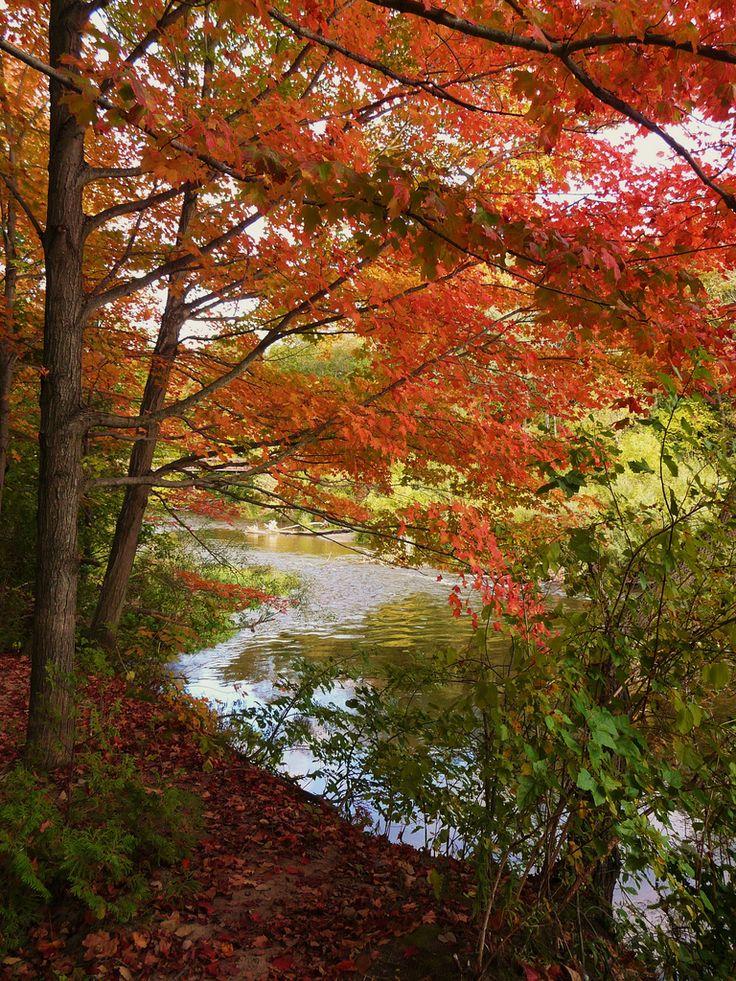 Fall Foliage, Apps Mill, Paris, Ontario   by amillionwalks, via Flickr
