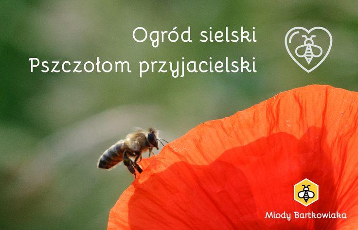 """Nowy cykl edukacyjny Gospodarstwa: """"Ogród sielski, Pszczołom przyjacielski"""""""