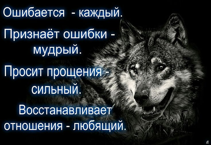 Фразы о волках с картинками