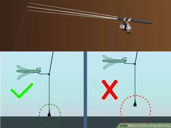 Image titled Fish a Drop Shot Rig Step 6