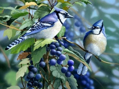 blue jays birds - Google Search | Drawing and Painting ...