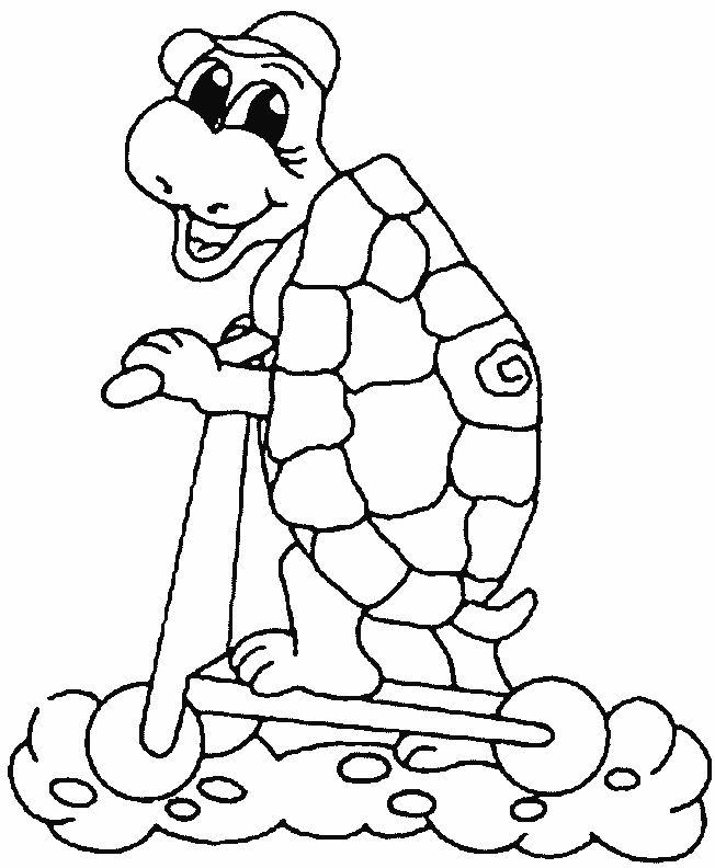 Best 25 Funny turtle ideas on