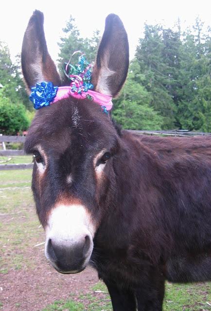 Happy Birthday Donkey! Dogs Cats Birds And Mini