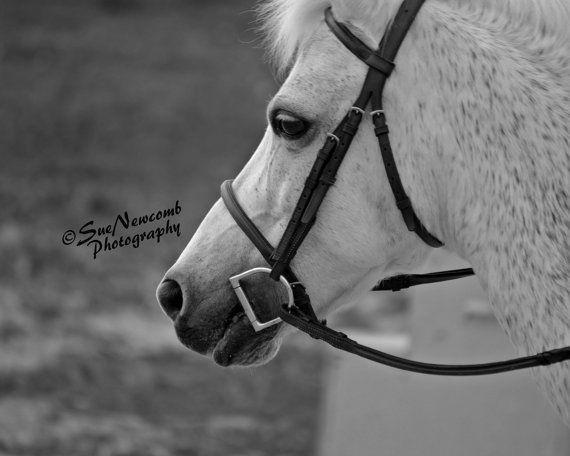 Gray Pony by SueNewcombPhotos on Etsy