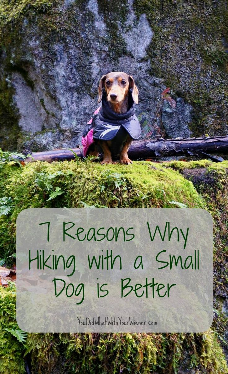 7 Reasons Why Hiking with a Small Dog is Better.