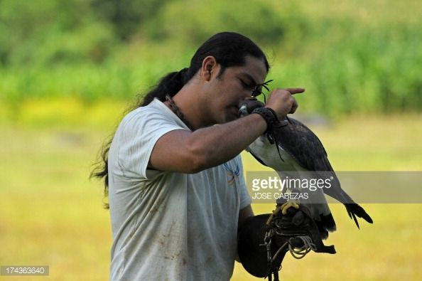 Orlando Jimenez ties the hood of a White-tailed Hawk (Buteo albicaudatus) after a flight training session near the Salvadorean Bird Rescue (ALAS) center in Apopa, 12 km north of San Salvador, El Sa... Pictures | Getty Images