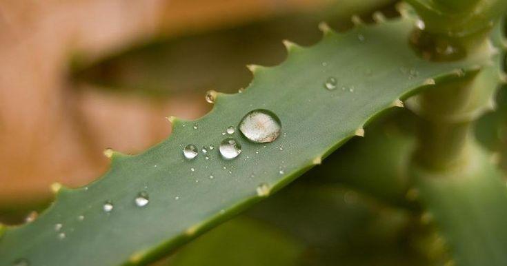 Esta mascarilla casera a base de Aloe vera es la solución a todos nuestros problemas cutáneos.