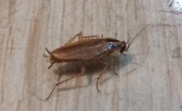 مكافحة حشرات البق والصراصير Insects Animals Moth