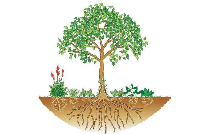 Bäume erfolgreich unterpflanzen - Vor allem die Flachwurzler unter den Bäumen lassen in ihrem Wurzelbereich kaum andere Pflanzen hochkommen. Mit unseren Tipps gelingt es Ihnen trotzdem, die Baumscheibe mit einer geeigneten Unterpflanzung zum Leben zu erwecken.