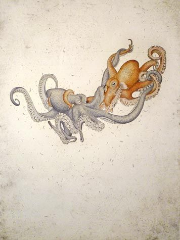 Briony Morrow-Cribbs. Octopus vulgaris, 2012.   Hand-tinted Etching. Edition of 10. 30 x 22 inches. $800
