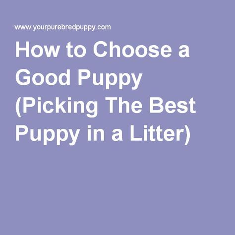 How to Choose a Good Puppy (Picking The Best Puppy in a Litter)