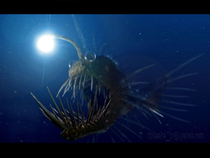94 Best Images About Deep Ocean Life On Pinterest Dubai