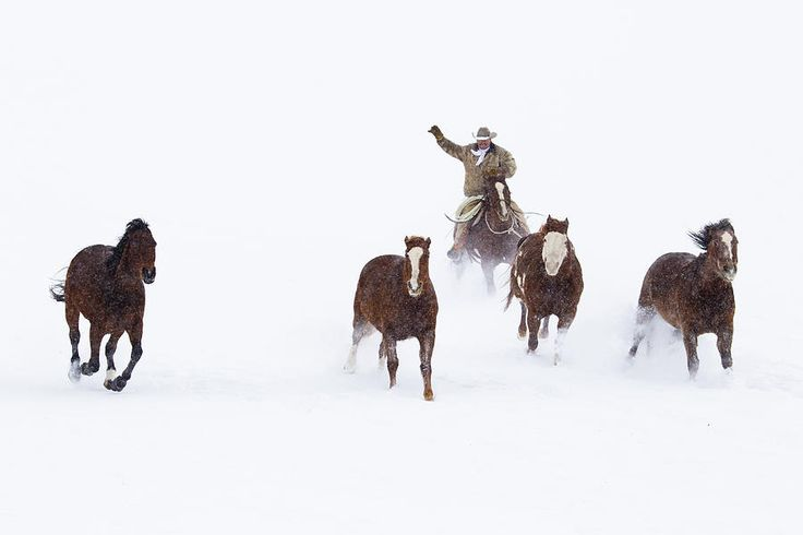 Cowboys And Horses In Winter Photograph by Frank Lukasseck